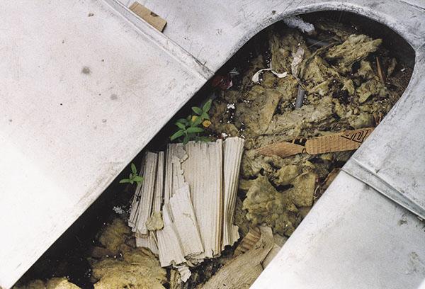 Bild 1:7. Om inte ränndalen görs ren från skräp är risken stor att det snabbt börjar växa både växter och svampar. Foto: Torbjörn Osterling.