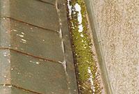 Bild 12:11. Exempel på ränndal som inte gjorts ren på många år. Här växer både mossa och gräs. Foto: Torbjörn Osterling.