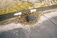 Bild 12:9. Fotränna med ansamling av skräp, löv med mera vid brunn. Foto: Torbjörn Osterling.